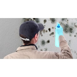 Mold Remediation Compliance Guide